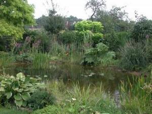 Das Gartenteich-Set kann durch weitere Artikel ergänzt werden z.B. Pflanzen.