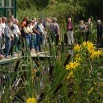 Großer Schwimmteich: Teichinformationen an echten Beispielen aus dem Park