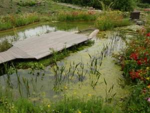 Filtergraben: Klares Wasser im Gartenteich