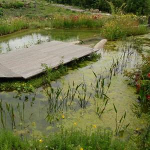 wasserpflanzen mit naturagart teiche planen bauen und pflegen. Black Bedroom Furniture Sets. Home Design Ideas