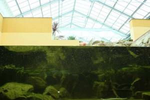 Im Palmen-Bistro bei NaturaGart ist das Wasser klar und transparent. Ideale Voraussetzungen für diese Fische.