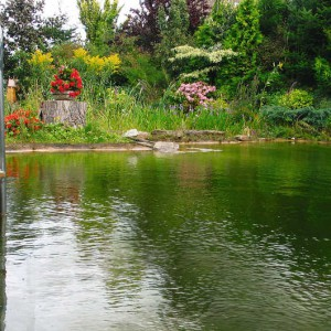 Ein Gartenteich wie ein Freizeitparadies vor der Haustür
