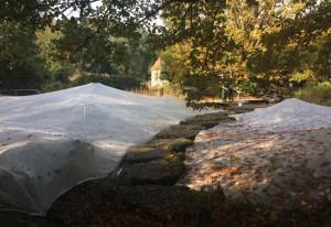 Noch sind die Teiche zum Schutz vor Laub eingepackt.