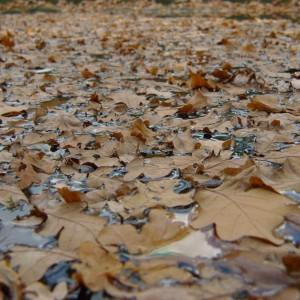 Ohne ein Teichnetz gelangen im Herbst Blätter in den Teich und bringen Nährstoffe für Algen ein.