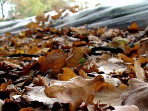 Blätter bringen Nährstoffe in den Teich ein, die im drauffolgenden Jahr zu Algenwachstum führen.