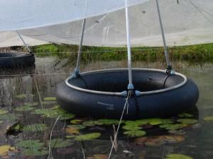 Eine Schwimmstütze hält das Netz hoch, das Laub sinkt nicht in den Gartenteich.