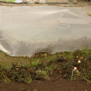 Teichnetz über einen Teich gespannt