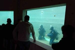 Schnuppertaucher im Tempelteich: Hier machen sie ihre ersten Schritte unter Wasser