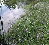 Teiche planen, Bauen, pflegen - Tipp Ufermatte auf der Teichfolie