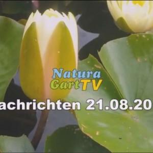 Seerosen im NaturaGart-Park sind einer der Höhepunkte des neuen Videos.