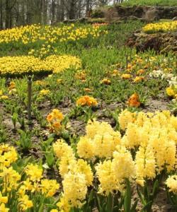 Endlich Frühling im NaturaGart Park