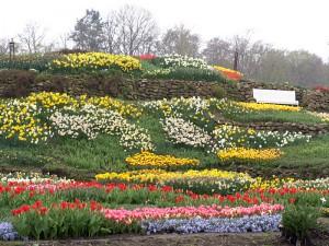 So sieht es Anfang April normalerweise im Park aus: Die Blüte beginnt.