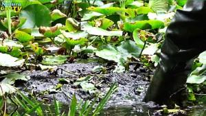 Naturteiche können so stark zuwachsen, dass vom Wasser in wenigen Jahren nichts mehr zu sehen ist.
