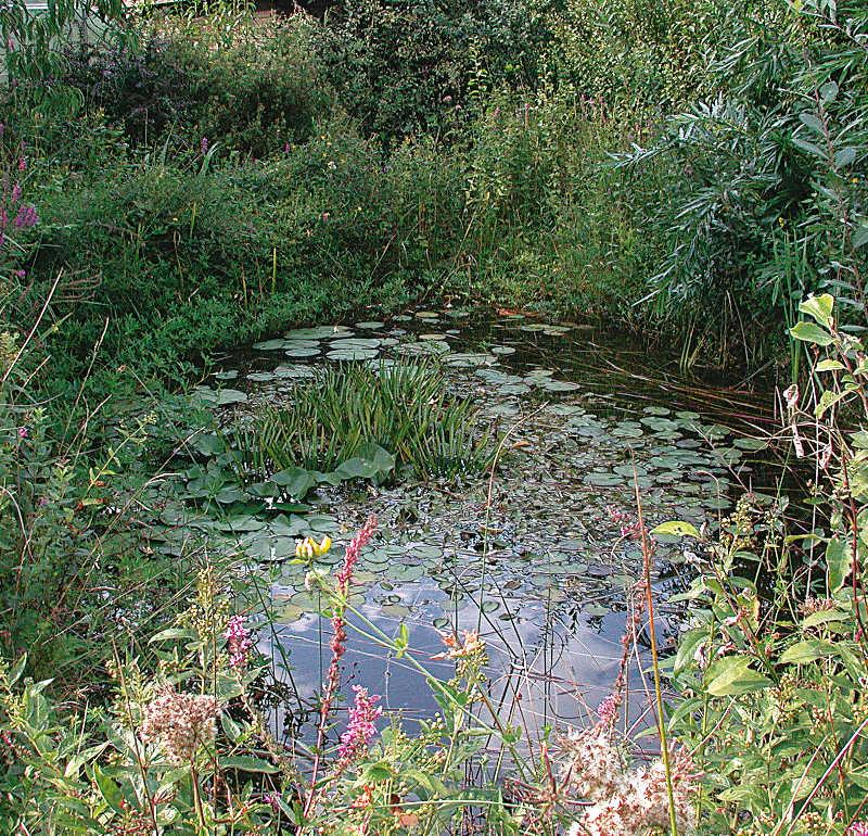 Gartenteichpflege was ist sinnvoll gartenteich for Gartenteichpflege algen