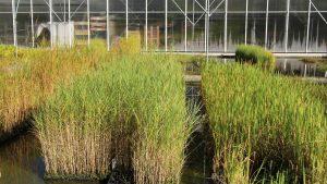 Pflanzen von NaturaGart stammen aus dem Freiland oder ungeheizten Gewächshäusern.