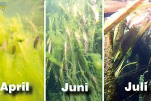 Unterwasseraufnahmen eines Garteteiches über mehrere Monate.