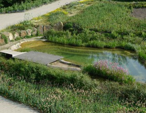 Neben Theorie gibt es auch Praxis an den Teichen im Park.