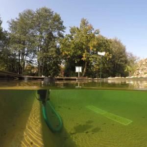 Sauberes und klares Wasser im Gartenteich durch Teichpflege.
