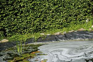 Schaum auf dem Teich kann ein Zeichen sein, dass etwas nicht stimmt