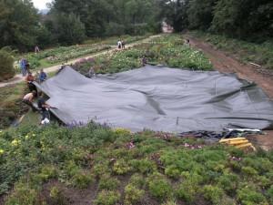 Schwimmteich mit NaturaGart bauen