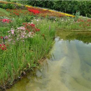Teichpflanzen