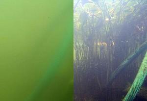 Schwimmteich vorher-naher: nach Einsatz des Teichfilters wird das Wasser im Schwimmteich innerhalb von 2 Wochen klar