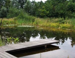 Ein natürlich gebauter Schwimmteich ist, wie in diesem Fall, von einem kleinen See nicht zu unEin natürlich gebauter Schwimmteich ist, wie in diesem Fall, von einem kleinen See nicht zu unterscheiden.terscheiden.