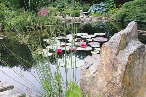Ein Gartenteich in einem wundervollen, exotisch anmutenden Umfeld, mit einer mittelgroßen Seerose als Krönung