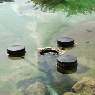 Der Schwimmkimmer sammelt Blätter ein, bevor sie auf den Teichgrund sinken können
