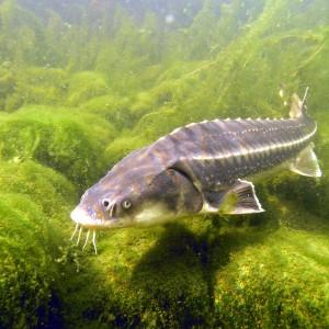 Teich aquarium mit naturagart teiche planen bauen und for Aquarium fische im teich