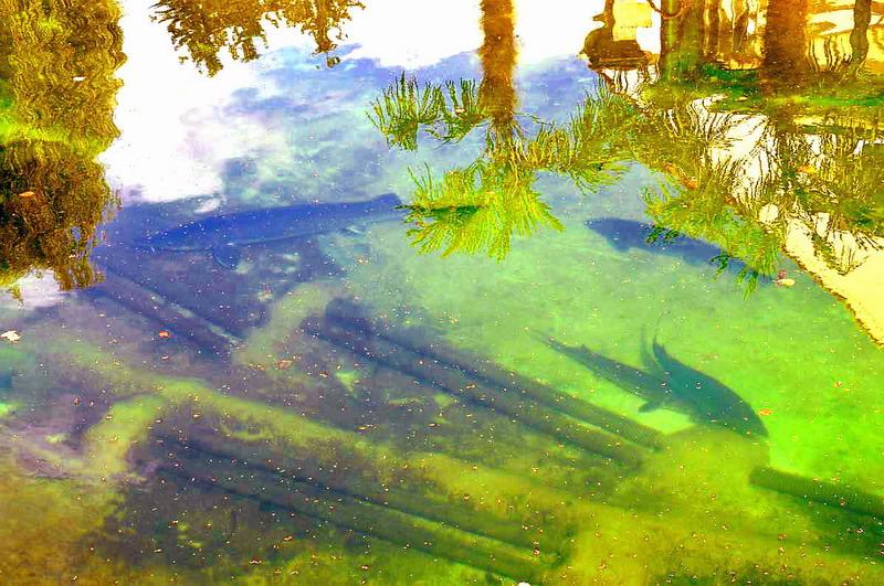 Naturagart schwimmteich paradies f r st re fischteich for Teichreinigung mit fischen