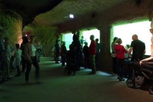 Teich-Aquarium: Besucher können riesige Störe bestaunen.