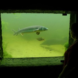 Blick in den Teich durch das teichfenster
