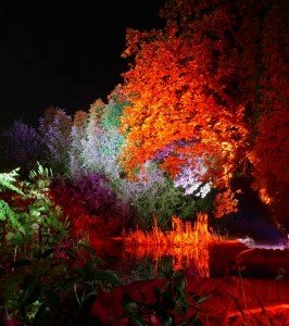 Feuerrot leuchtet der Baum und das Ufer scheinbar aus sich heraus