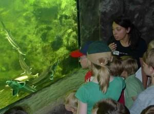 Einblicke in die Unterwasserwelt durch ein Teichfenster