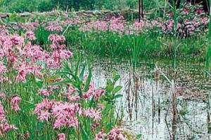 NaturaGart Teichfolie - Die richtige Ufergestaltung