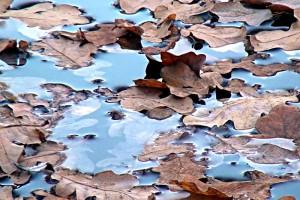 Herbstlaub auf der Teichoberfläche