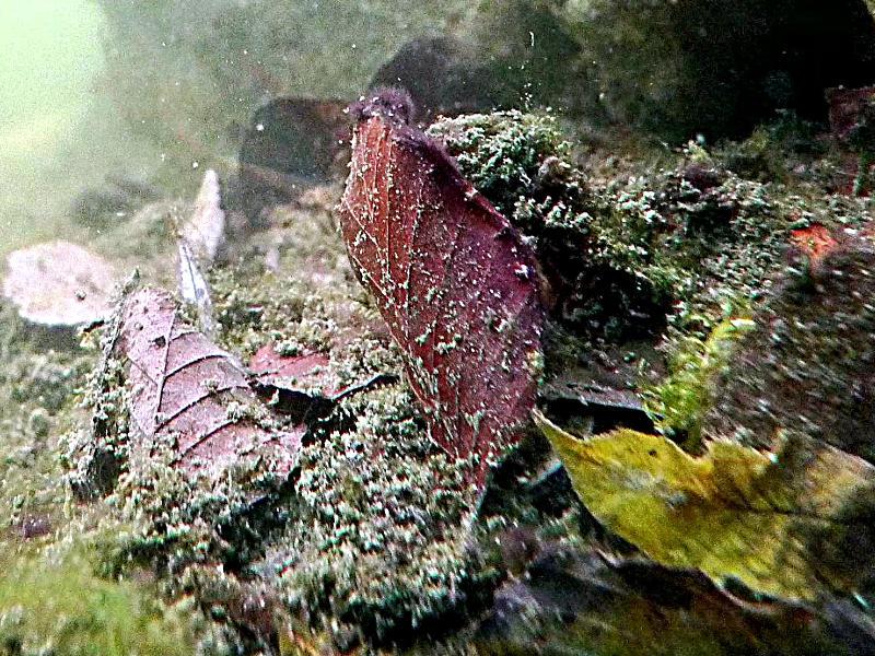 Naturagart video zum thema teichabdeckung im herbst produkte for Algen im fischteich
