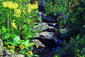 Teichpflanzen-Bachlauf-Sortiment