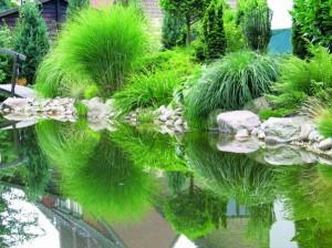 Teichpflanzen Teichumfeld