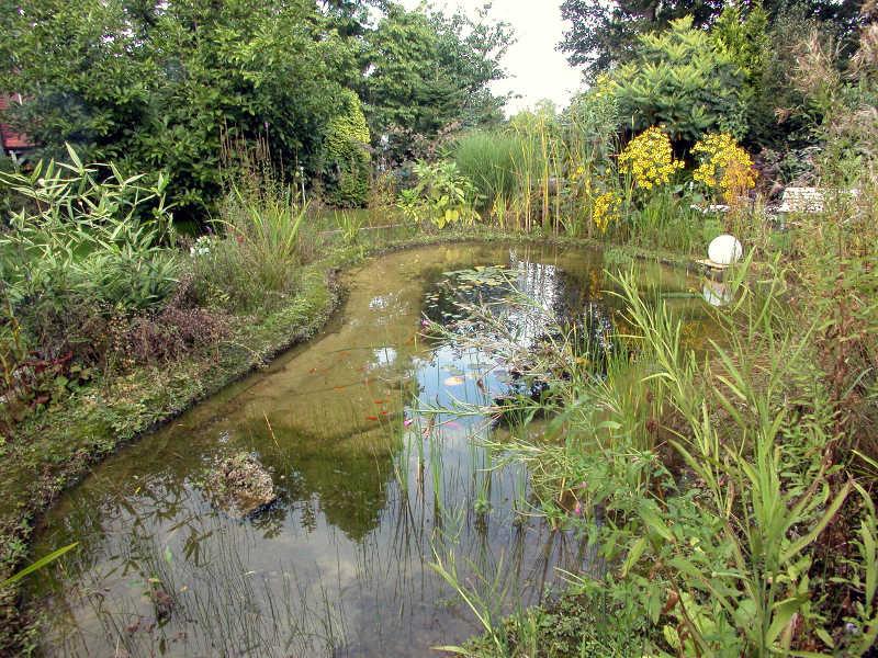 Teichrand gestaltung gartenteich planung bau und pflege for Fischteich schutz