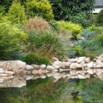 Gartenteich schwimmteich fischteich naturteich zum for Gartenteichpflege algen