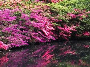 Zier-Gehölz-Sortiment Japanisches Ufer