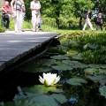 teichsteg-im-park-naturagart-1