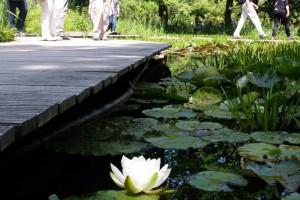 Ein Steg führt direkt ans Wasser und lädt ein dort zu verweilen.