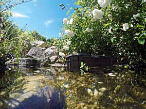 Gut versteckt: Die Ziel-Saug-Technik. Sie befindet sich am Übergang zwischen dem Teich und dem Filtergraben. Die Ansaugpunkte können bequem vom Ufer aus geregelt werden.
