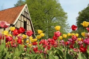 Tulpen im NaturaGart Park
