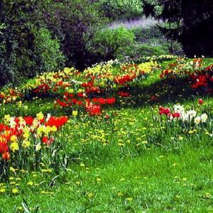 Tulpenwiese im NaturaGart Park