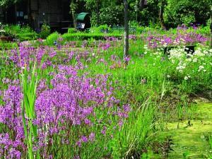 Ufermatte von NaturaGart mit Ufermatten-Blumensaat