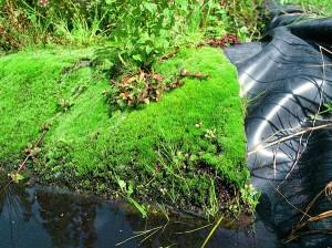Mit Moos oder Blumen bewachsene Ufermatte